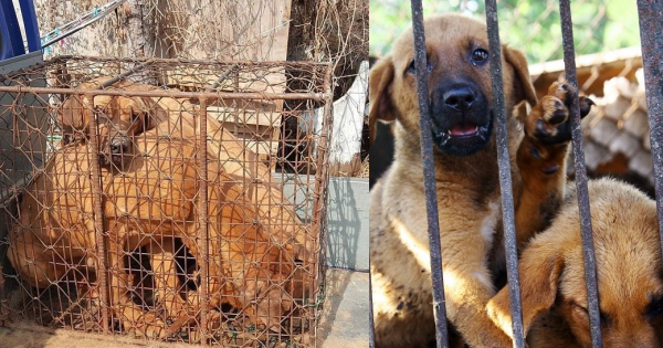 Paju, South Korea, Shut down the illegal dog farms!