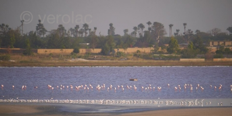 Pour une réserve naturelle communautaire au Lac Rose (Retba) au Sénégal