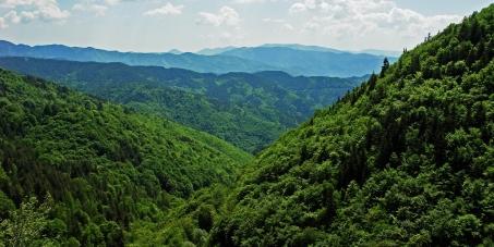24 ώρες για να σώσουμε τα δάση της Ελλάδας!