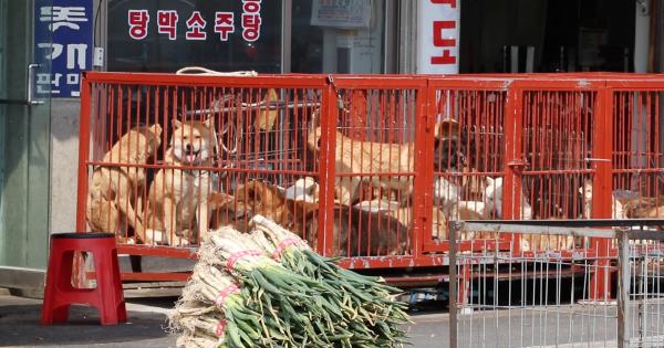 Changwon, South Korea, Shut down the illegal dog farms!