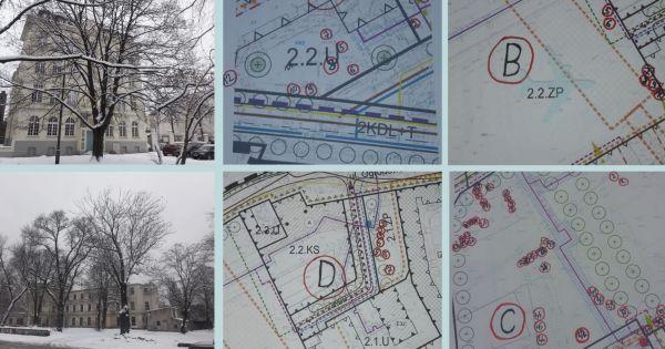 Zachowajmy stare drzewa!  Ogrody Karskiego, okolice Manufaktury, Łódź.