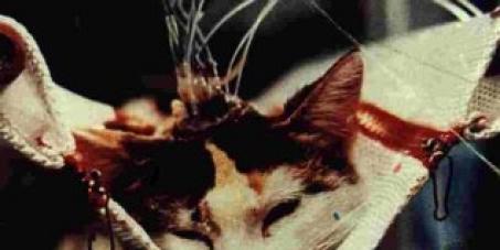 PELA PROIBIÇÃO DO USO DE ANIMAIS PARA PESQUISAS CIENTÍFICAS EM TODO TERRITÓRIO NACIONAL