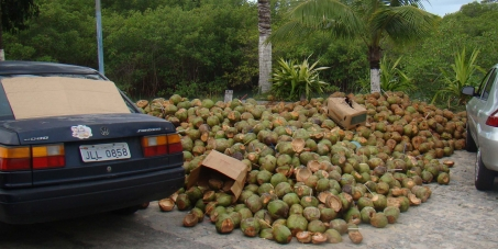 O coco verde após ter sua água consumida deveria ser encaminhado para reciclagem. Concorda??