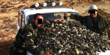 STOP BIRD MASSACRES IN LEBANON