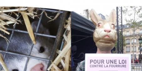 Monsieur Nicolas Hulot : interdisons les élevages à fourrure en France.