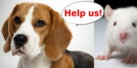 Stop using beagles and mice to experiment with the rabies virus in Taiwan!