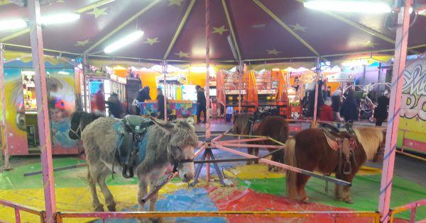 Mairie d'Albi : La fin des animaux exploités dans la fête foraine d'Albi