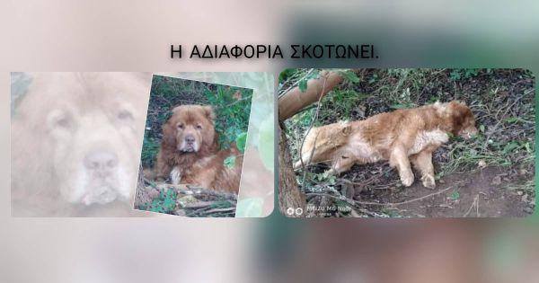 Δικαίωση για τη δολοφονία του Καυκάσιου στα Μεγάλα Χωράφια Χανίων,Κρήτης
