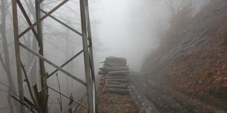 Министър Председател, Р България/Prime Minister Bulgaria: Изискваме да се прекратят сечите и да се направи възстановяващ