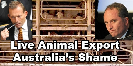 Stop Live Animal Export from Australia