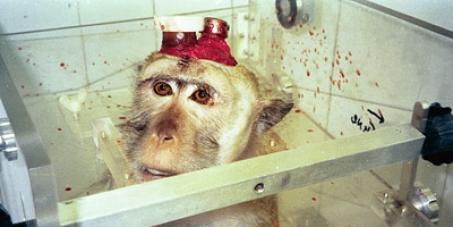 Covance Münster: Einstellen der Tierversuche