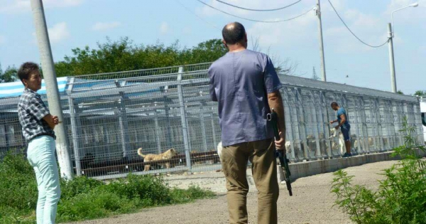 Help us stop the killing of 500 dogs in Ecosal, Galati! Twin town of Coventry in the UK.