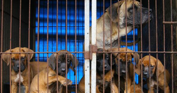 Chuncheon, South Korea, Shut down the illegal dog farms!