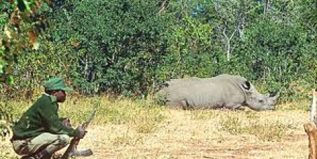 Minister Molewa, Dept of Environmental Affairs, we call on you to change the Rules of Engagement in the rhino war