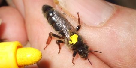 The Malta Government: Save the endemic honeybee Apis Mellifera Ruttneri