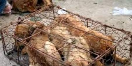 PETITION Non à l'importation au Canada de fourrure et de peaux de chiens et de chats en provenance de l'AsiePETITION Not in the import in Canada of fur and skins of dogs and cats(chats) from Asia