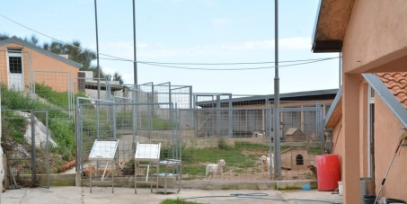 TO THE MAYOR OF BUDVA: free access to the asylum at Paštrovska gora every working day for vol