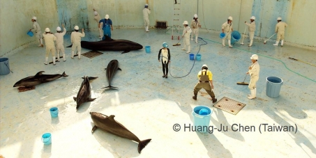To stop dolphins and whales captivity in japan. no more captives. Set the captives free.