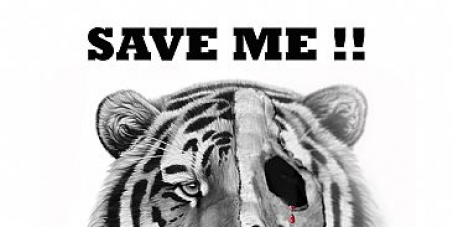 Close all Tiger farms in China