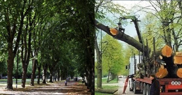 Monsieur le président Hollande: ne coupez pas des grands arbres en bonne santé