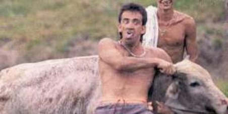 REPRESS the outlawed BULL TORTURE ongoing in Brazil: FARRA do BOI in Santa Catarina