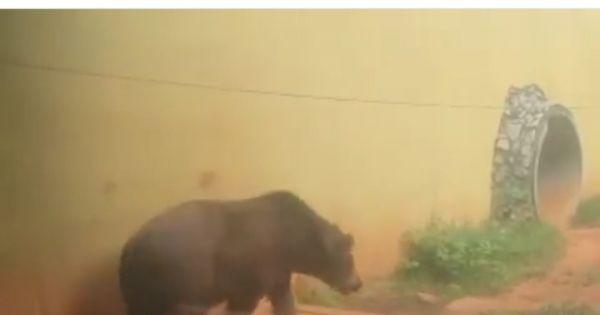 Salve o Urso Robinho