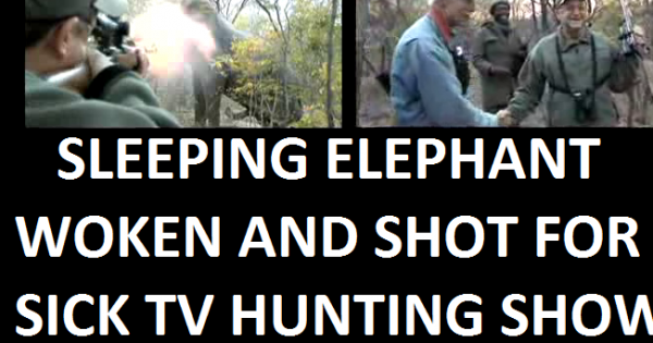 President Barack Obama :  STOP Entitled Americans killing the last of the AFRICAN ANIMALS for TV HUNTING FUN