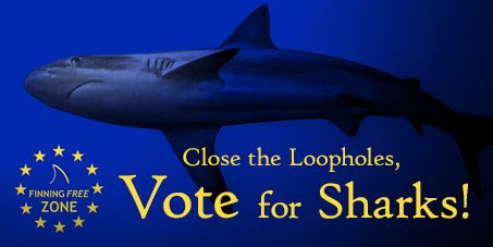European Parliament Voted to Close Loopholes in EU Shark Finning Ban