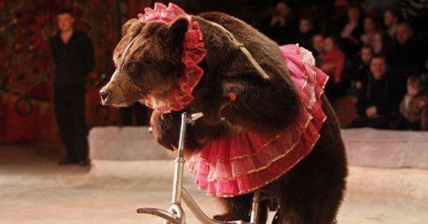 NIE dla cyrku ze zwierzętami w Środzie Śląskiej