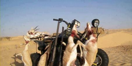 arrêtez le braconnage des émirs dans le sud algérien