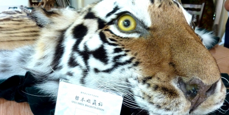Support Chinese civil society in helping to end the trade in tiger parts.