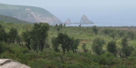 Non au projet de complexe pétrochimique à Guerbes Sanhadja (Skikda-Algérie)