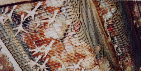 Please help release 24 million laying hens in South Africa from the torment of their battery cages!