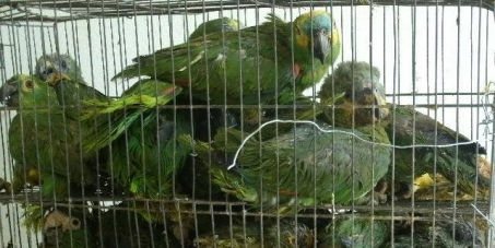 Terme au commerce des oiseaux à Caxias-Rj - Brésil.