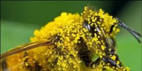 Enfin une formidable chance de sauver les abeilles !