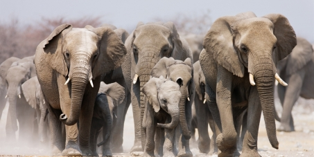 Namibia: Stop ALL Hunting of Rare Desert Elephants!