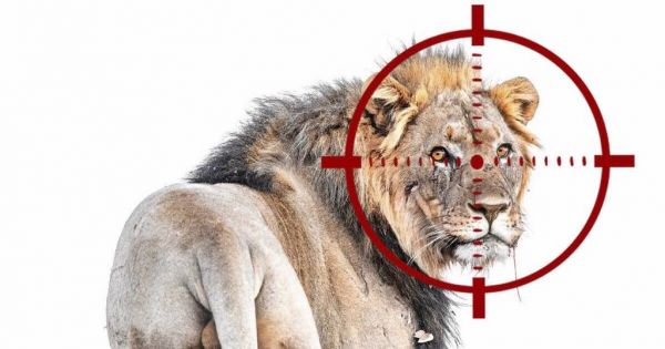 The Minister of Environment and Tourism Namibia: STOP KILLING AND HUNTING OF NAMIBIA'S DESERT ADAPTED LIONS NOW!!!