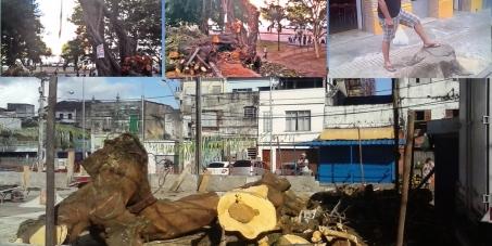 Ao Prefeito de Salvador, Bahia Exmo. Sr. Antonio Carlos Magalhães Neto: Desenvolva uma política séria ambiental e replante as árvores cortadas