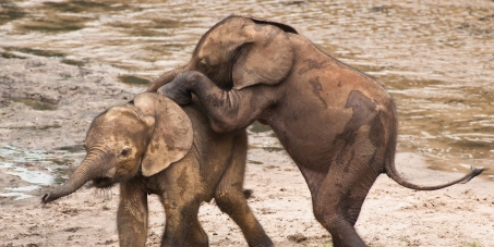 STOP ELEPHANT SLAUGHTER!