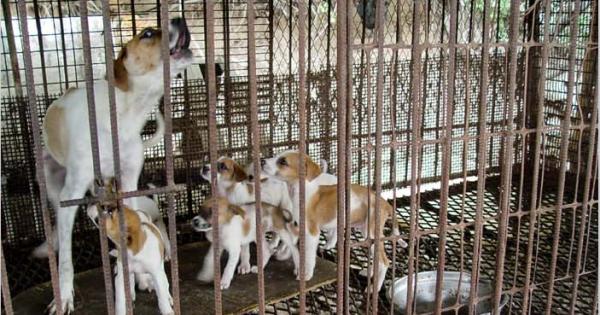 Gangjin, South Korea, Shut down the illegal dog farms!