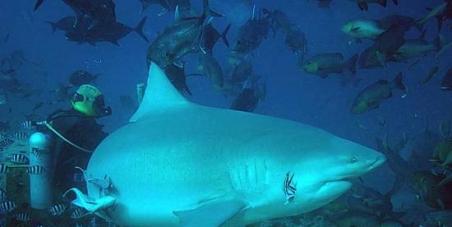 Arrêter le massacre des requins à la Réunion