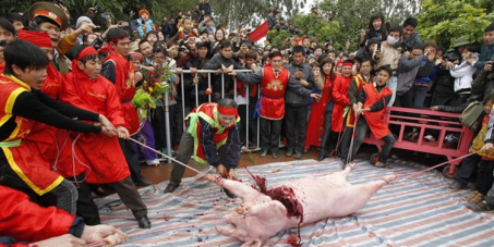 Abolish the brutal pig festival at Nem Thuong village, Vietnam