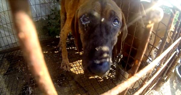 Incheon, South Korea, Shut down the illegal dog farms!