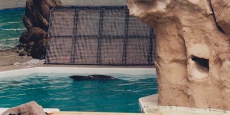 Wir fordern die Schließung aller Delfinarien in Europa !