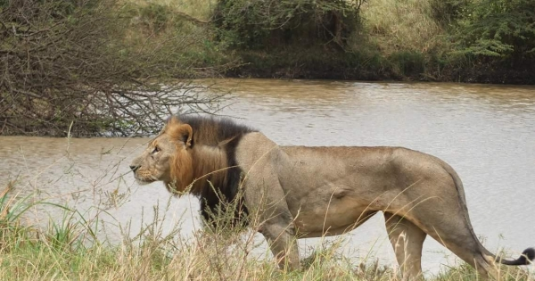 Govt of Kenya, KWS & All other Stake Holders: Save our Wildlife -Hold KWS accountable for Mohawk's Death- Save NNP