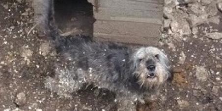 Une présidente d'associationpasse au tribunalpour avoir retiré 2 chiennes maltraitées