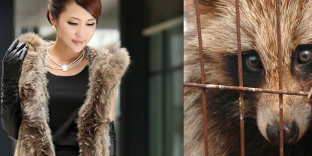 Stop eBay selling fur from Chinese Fur Farms