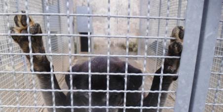 ai Comuni ANCI, alle Regioni, al Ministero della Salute, al Governo: Applicare la legge sulla prevenzione del randagismo e tutelare gli animali