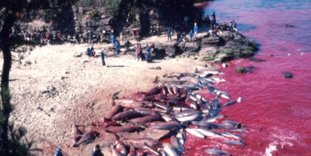 Japanese Government: Stop the slaughter of dolphins in Taiji