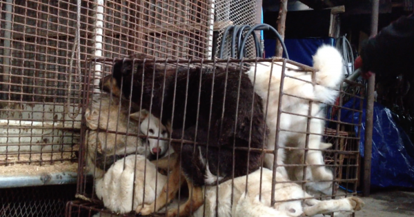 Seongju, South Korea, Shut down the illegal dog farms!